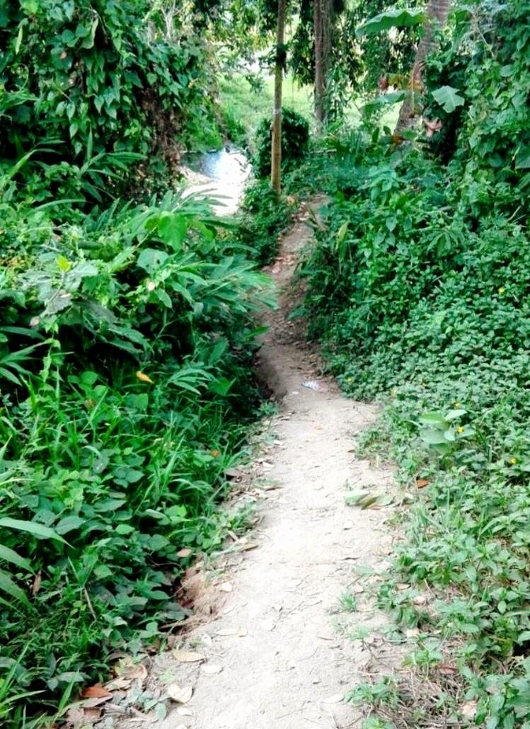 ウブドの散策道5